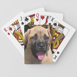 USA, California. Mastiff Puppy Portrait Playing Cards