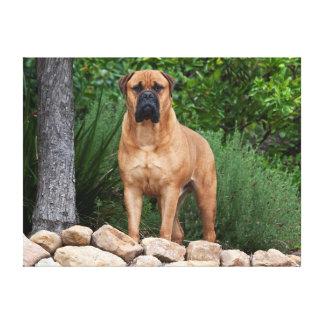 USA, California. Mastiff Standing In A Garden Canvas Print