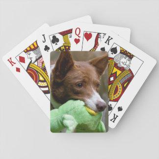 USA, California. Mcnab Shepherd At Play Card Deck