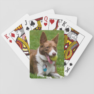 USA, California. Mcnab Shepherd Waiting Playing Cards