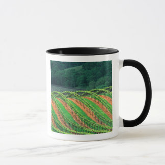 USA, California, Mendocino County, a trellised Mug