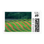 USA, California, Mendocino County, a trellised Stamps