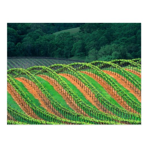 USA, California, Mendocino County, a trellised Postcard