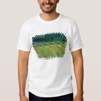 USA, California, Mendocino County, a trellised Shirt
