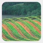 USA, California, Mendocino County, a trellised Stickers