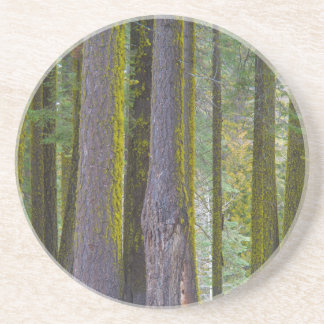 USA, California. Moss Covered Tree Trunks Drink Coaster