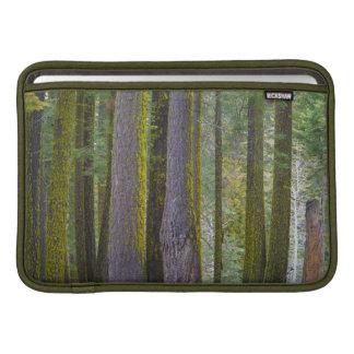 USA, California. Moss Covered Tree Trunks MacBook Sleeve
