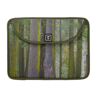 USA, California. Moss Covered Tree Trunks Sleeve For MacBooks