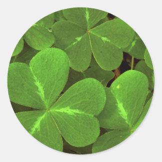 USA, California, Muir Woods. Close-up of clover Classic Round Sticker