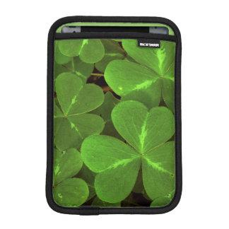 USA, California, Muir Woods. Close-up of clover iPad Mini Sleeves