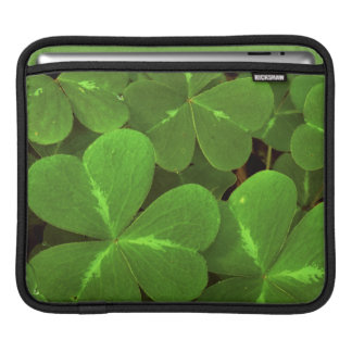 USA, California, Muir Woods. Close-up of clover Sleeves For iPads