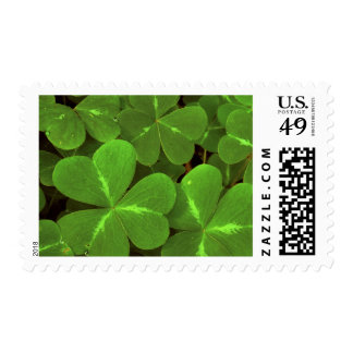 USA, California, Muir Woods. Close-up of clover Stamp