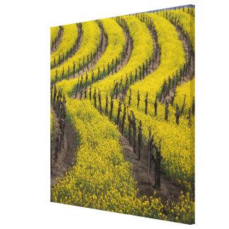 USA, California, Napa Valley, Los Carneros Ava. Gallery Wrap Canvas