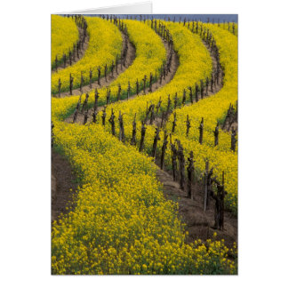 USA, California, Napa Valley, Los Carneros Ava. Greeting Card