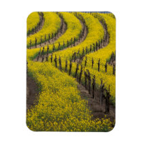 USA, California, Napa Valley, Los Carneros Ava. Magnet