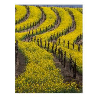 USA, California, Napa Valley, Los Carneros Ava. Postcard