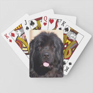 USA, California. Newfoundland Portrait Playing Cards