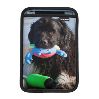 USA, California. Newfoundland With Toy In Mouth iPad Mini Sleeves