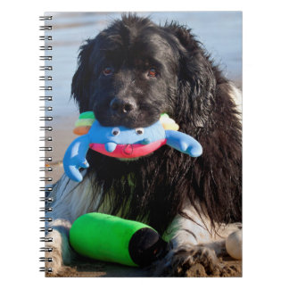 USA, California. Newfoundland With Toy In Mouth Notebook