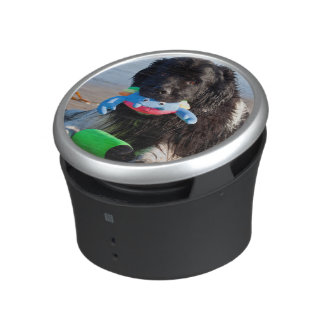 USA, California. Newfoundland With Toy In Mouth Speaker