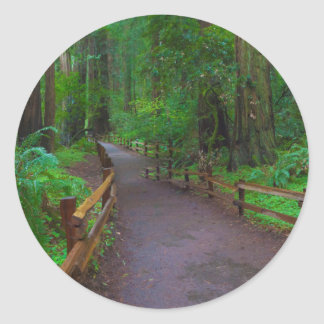 USA, California. Path Among Redwoods Classic Round Sticker