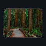 "USA, California. Path Among Redwoods In Muir Magnet<br><div class=""desc"">Anna Miller / DanitaDelimont.com USA,  North America,  California</div>"