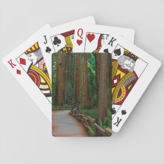 USA, California. Path Among Redwoods In Muir Playing Cards