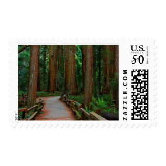 USA, California. Path Among Redwoods In Muir Postage