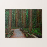 USA, California. Path Among Redwoods In Muir Puzzles