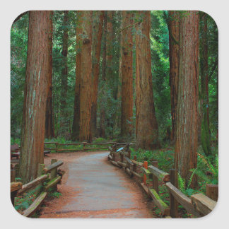 USA, California. Path Among Redwoods In Muir Square Sticker