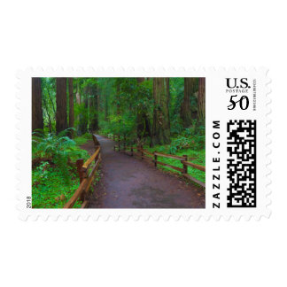 USA, California. Path Among Redwoods Postage