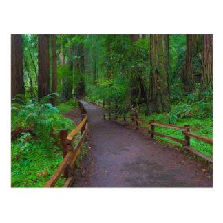 USA, California. Path Among Redwoods Postcard