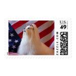 USA, California. Patriotic Maltese Postage Stamp