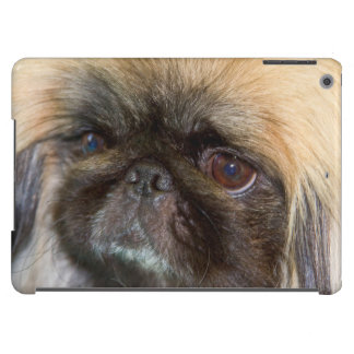 USA, California. Pekingese Close Up Cover For iPad Air