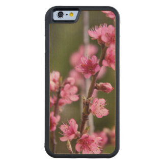 USA, California. Pink Blooms On A Tree Carved® Maple iPhone 6 Bumper Case