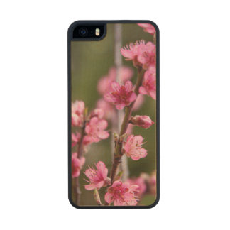 USA, California. Pink Blooms On A Tree Wood Phone Case For iPhone SE/5/5s