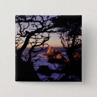 USA, California, Point Lobos, cypress tree and Button