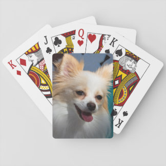 USA, California. Pomeranian Portrait Card Decks