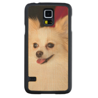 USA, California. Pomeranian Portrait With Red Carved Maple Galaxy S5 Case