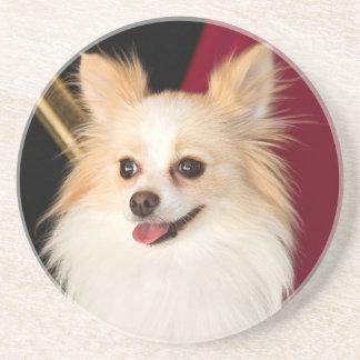 USA, California. Pomeranian Portrait With Red Drink Coaster