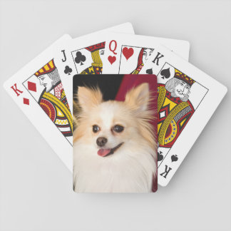 USA, California. Pomeranian Portrait With Red Playing Cards