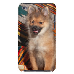 USA, California. Pomeranian Sitting Case-Mate iPod Touch Case