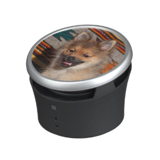 USA, California. Pomeranian Sitting Speaker
