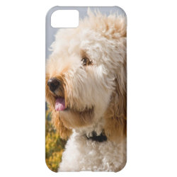Case-Mate Barely There iPhone 5C Case with Labradoodle Phone Cases design