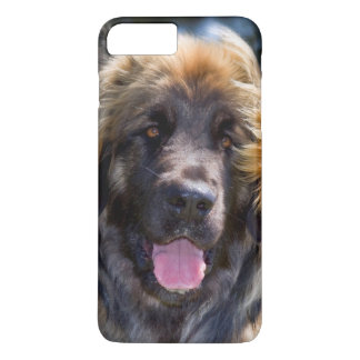 USA, California. Portrait Of Leonberger Sitting iPhone 7 Plus Case