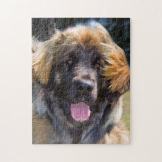 USA California Portrait Of Leonberger Sitting Jigsaw Puzzles