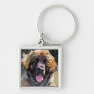 USA, California. Portrait Of Leonberger Sitting Silver-Colored Square Keychain