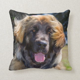 USA, California. Portrait Of Leonberger Sitting Throw Pillow