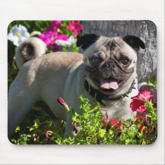 USA, California. Pug In Flower Garden Mouse Pad