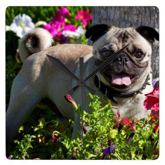 USA, California. Pug In Flower Garden Square Wall Clock